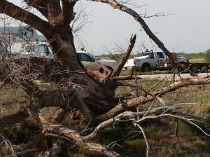 In the same area of the damaged building was a large tree that was totally uprooted.
