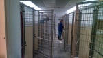 18 Pens inside the Levelland Animal Shelter--All cleaned and Disinfected Daily.
